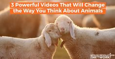 Watch these 3 powerful, compelling videos and see if your thinking about animals — and yourself — shifts.