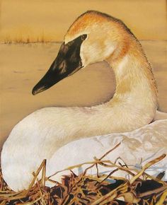 "Daily Paintworks - ""Trumpeter Swan"" - Original Fine Art for Sale - © Nancy Parsons"