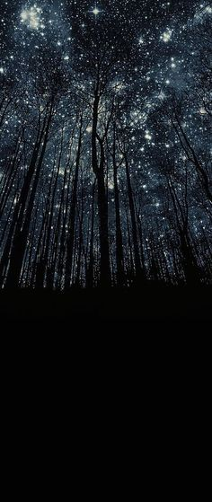 Oh my! Stunning! A forest of stars! I love our planet and universe.