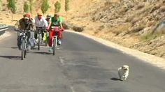 """A stray dog showed incredible loyalty, willpower and endurance, after she ran an extraordinary 1833 kilometers (1,056 miles) between China and Tibet. The small dog followed a team of cross-country cyclists after they fed her. She ran with them for 24 days, traveling from Kangding Sichuan province in China, to Lhasa in Tibet."" http://www.dogheirs.com/elleng/posts/1243-loyal-stray-dog-follows-cyclists-for-24-days-and-nearly-2000-kilometers"