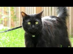How To Keep Your Cat Happy! - We Love Cats and Kittens