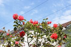 Photo Diary: Portland in Bloom - Urban Outfitters - Blog