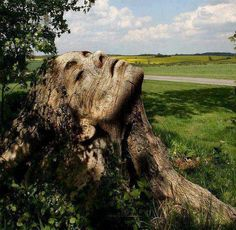 amazing..carved from a large tree stump