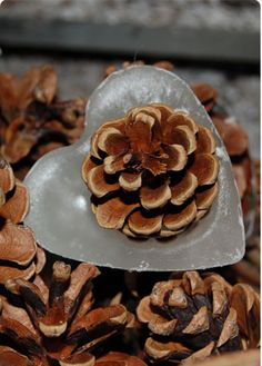 Heart shaped Kindle Cones NEW IN! These are a perfect valentines gift! Same as our original kindle cones but heart shaped! Kindle cones are natural pine cones whose base has been set into a bed of wax infused with bark, spices and cinnamon oil. Light the wick and set amoungst the kindling and your fire will be blazing in minutes. Hand made in Dorset. Pack of 12 Price: £13.75