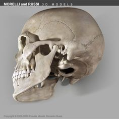 SKULL EXTREME Model available on Turbo Squid, the world's leading provider of digital models for visualization, films, television, and games. Skull Reference, Anatomy Reference, Pose Reference, Scull Drawing, Skull Illustration, Art Illustrations, Pencil Drawings, Art Drawings, Skull Anatomy