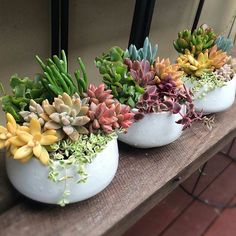 60 Gorgeous DIY Succulent Fairy Garden Ideas These trendy Succulents ideas would gain you amazing compliments. Check out our gallery for more ideas these are trendy this year. Rainbow Succulent, Succulent Bowls, Succulent Gardening, Succulent Arrangements, Container Gardening, Succulents In Containers, Cacti And Succulents, Planting Succulents, Cactus Plants