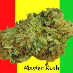 Purple Kush a Potent Indica Strain - Denver Flavours Growing Marijuana Indoor, Marijuana Plants, Cannabis Growing, Cannabis Seeds For Sale, Weed Store, Buy Weed, Medical Cannabis, Smoking Weed, Bonito