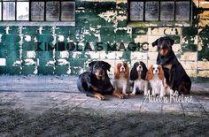 Kimbola's Magic Rottweiler en Cavalier King Charles Spaniël kennel