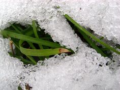 Snow melting. Grass growing