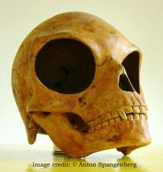 A mysterious skull discovered at Olstykke on the Danish island of Sealand in July 2007 during the replacement of old sewer pipes.