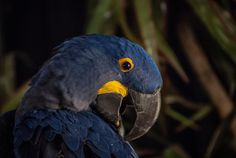 Preening for the Photo Geeks by Kevin Pashuk on 500px