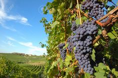 Wine Country Stock Photos, Pictures, Royalty Free Wine Country ...