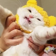 Exceptional Beautiful cats tips are readily available on our site. Take a look and you wont be sorry you did. Cute Funny Animals, Cute Baby Animals, Animals And Pets, Funny Cats, I Love Cats, Crazy Cats, Cool Cats, Diy Cat Tent, Gatos Cool