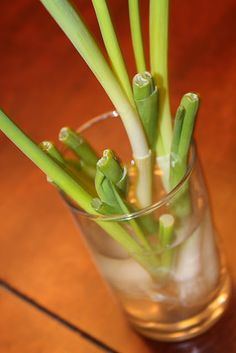 Grow green onions in water - so easy!