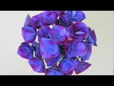 Как сделать цветы из холодного фарфора живыми? Как правильно красить цветы? Какая краска для этого нужна?