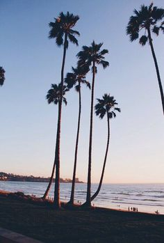 Palm Trees | Source: Unknown