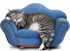 Kitty couch in blue.