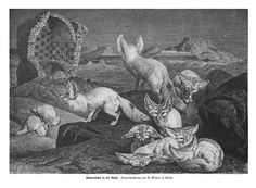 1876 sketch of pack of fennec foxes
