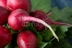 Ravanello rosso (Raphanus sativus) -radish red salad  © Pietro D'Antonio