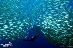 scuba diving with Action Scuba in Bonaire