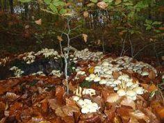 Autumn is here...mushrooms, mushrooms, mushrooms.