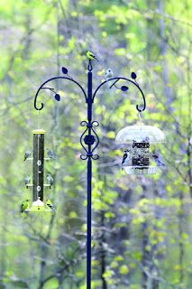 Wild Birds Unlimited Search Results For Advanced Pole System Wild Birds Unlimited Wild Birds Birds