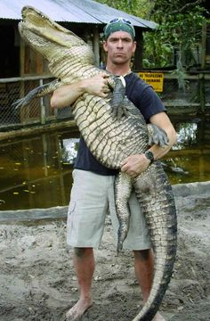 Check it out! Paul is cradling a gator  at Everglades Holiday Park. Would you like to see this in person? Come on down to visit with the Gator Boys, take an airboat tour of the wild Everglades and watch a gator show. It's all included in the price of a ticket!