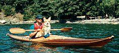 corgi dog in a sea kayak