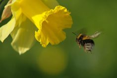 BEES SHOW OFF THEIR PERSONALITIES WITH THEIR WILLINGNESS TO EXPLORE