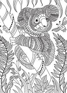 Mandala Koala Bear Coloring Pages - Coloring Ideas Peacock Coloring Pages, Bear Coloring Pages, Printable Coloring Pages, Adult Coloring Pages, Coloring Sheets, Coloring Books, Mandala Coloring, Dibujos Zentangle Art, Poster Colour
