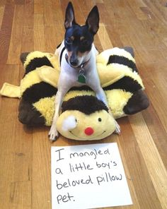 The best of dog shaming - Part 5 - FB TroublemakersFB Troublemakers