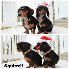Inexpensive Target Christmas Decorations! Great pet accessories! JenniferDecorates.com