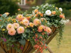 Brilliant Fall Planters Outdoor Ideas For Awesome Home Front 43 There are a lot of reasons to begin growing these plants. Next, you're need potting mix that's full of nutrients. A pure fertilizer could get the job done also, but be skeptical of util… Container Flowers, Container Plants, Container Gardening, Gardening Tips, Vegetable Gardening, Fall Hanging Baskets, Hanging Plants, Plants Indoor, Garden Bulbs