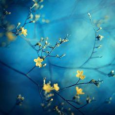 ***little yellow flowers by Alena Červeňanská