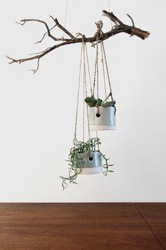 poolside hanging planter