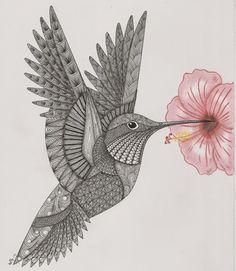 Kolibri musterzeichnung