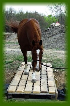 Desensitizing horses. Bridge walking is common in trail class and on the trail.