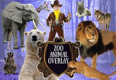 Zoo Animal overlay Farm animal clipart Elephant by PhotoMaterial Photoshop Overlays, Etsy Crafts, Photoshop Photography, Zoo Animals, Wolf, Lion, Digital Art, Elephant, Teddy Bear