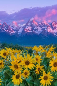 Grand Tetons National Park, Wyoming and yes they looked exactly like that :)