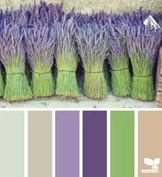 bundled hues (design seeds) bundled hues This site is all about color. Scan through it and find the one color combo you like or do as they did and choose a picture or fabric that is absolutely your favorite thing and match the colors up to that. Colour Pallette, Color Palate, Colour Schemes, Color Combos, Purple Color Palettes, Paint Schemes, Design Seeds, Color Stories, Color Swatches