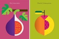 Fruit Art Prints by Christopher Dina