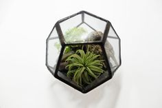 Terrarium Kit - Small Glass Geometric Dodecahedron - With ionantha air plant - Ships to Canada