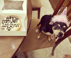 Happy birthday Addison  #thedogbakery  Photo by @stevenc063