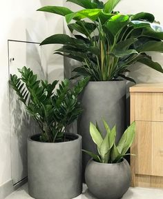 Indoor plants and cement planters are perfection! Indoor plants and cement planters are perfection! Balcony Plants, House Plants Decor, Patio Plants, Garden Planters, Indoor Plants, Hanging Plants, Cement Planters, Balcony Gardening, Concrete Planters