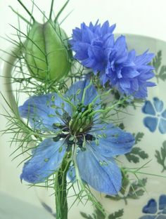 Nigella (seed pod and flower) and cornflower buttonhole