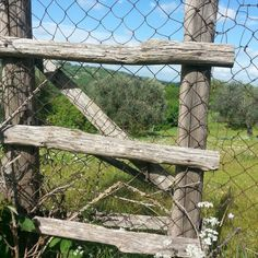 """Typical wood ladder named """"scalandrino"""" used to go over fences."""