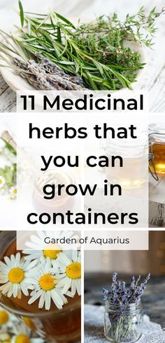 herb garden 11 Must have Medicinal herbs that you can grow anywhere, including in containers. Also, a FREE printable with 11 pages of plant information and medicinal garden plans and layout. Garden Care, Diy Garden, Garden Guide, Herb Garden Indoor, Herb Guide, Garden Ideas, Edible Garden, Healing Herbs, Medicinal Plants