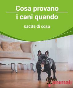 Cosa provano i cani quando uscite di casa  Vi siete mai #chiesti cosa succede ai vostri #cani quando li lasciate da soli a #casa? #Addestramento