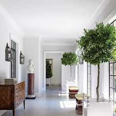 house-plants-03.jpg