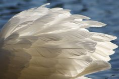 Nice light coming through the feathers Must try to paint this